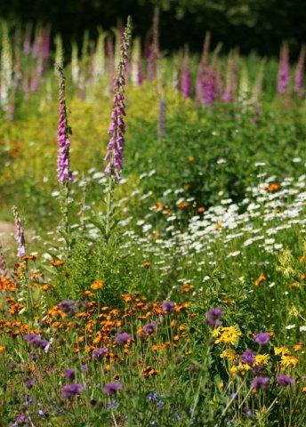 wilde bloemen in je tuin   wilde tuinideeën 1
